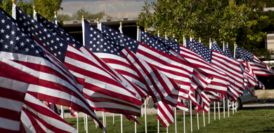 American flags flying in a row with green grass